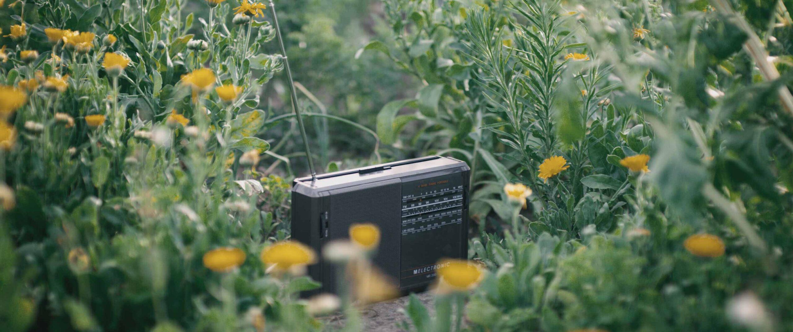 Pünt | radio in garden